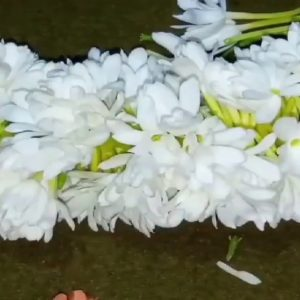 swadesh flowers